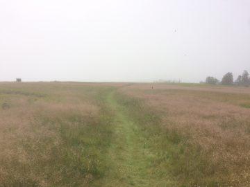The walk, headed south, on Kent Island.