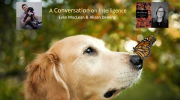 A Conversation on Intelligence: Evan MacLean & Alison Deming @ Online: Registration Required